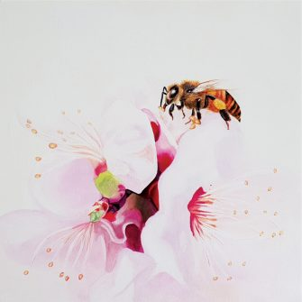 Cherry Blossoms & Bee